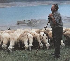 cuidar-ovejas