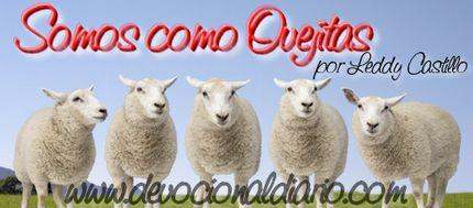 somos como ovejitas