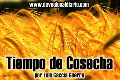 Tiempo de cosecha – Luis Caccia Guerra