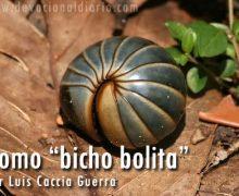 """Como """"bicho bolita"""" – Luis Caccia Guerra"""